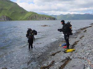 SCUBA divers wading near show, preparing to collect clams near Dutch Harbor, Alaska.