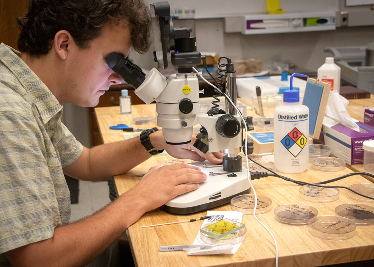 student inspecting a sample by microscope